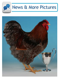 Latest poultry competition news and articles