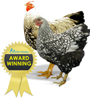 Award Winning Poultry Breeds.
