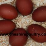 Welsummer Chickens [2]